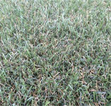 Turf Synthetic Field Turf M2 Min 5 L/M (5x3.68)