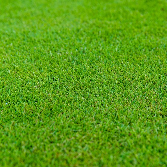 Sir Grange DNA Certified Zoysia Turf M2 (1.7mx.6m)