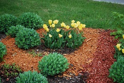 Using different colours of mulch 