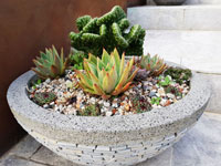 River pebbles in a natural stone pot with succulents