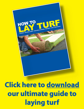 Turf Guide 2021